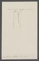 Dentalium lacteum - - Print - Iconographia Zoologica - Special Collections University of Amsterdam - UBAINV0274 081 10 0024.tif