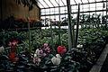 Dicksons Florist show room and Cereus spp 01.jpg