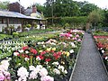 Dingle Garden centre - geograph.org.uk - 808750.jpg