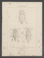 Diversen - Print - Iconographia Zoologica - Special Collections University of Amsterdam - UBAINV0274 023 10 0002.tif