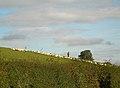 Dog Training - geograph.org.uk - 258354.jpg