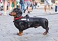 Dog on Hradčanské náměstí.jpg