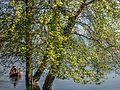 Dojran Lake 26.jpg
