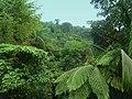 Dominica, Karibik - In the Rainforest near Laudat and Wotton Waven - panoramio.jpg
