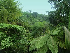 Dominica, Karibik - In the Rainforest near Laudat and Wotton Waven - panoramio.jpg