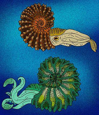 Bajocian - Life restorations of two different ammonite genera.