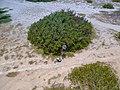 Drone Base Klein Curacao (213574413).jpeg