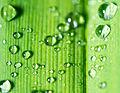Droplets (8760037481).jpg