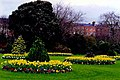 Dublin - Merrion Square landscaping - geograph.org.uk - 1494282.jpg
