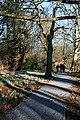 Duff House Woods - geograph.org.uk - 685979.jpg