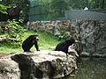 Dusit zoo baer.JPG