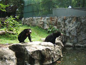 Dusit Zoo - Bear in Dusit Zoo