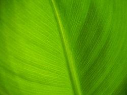 Зелёни цвет