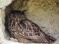 Eagle Owl (19337894722).jpg