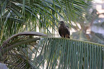 Eagle on leaf.jpg
