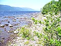 Eastern Shore of Loch Ness - geograph.org.uk - 884601.jpg