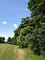 Edge of Down Copse - geograph.org.uk - 1355157.jpg