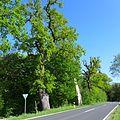 Ein Naturdenkmal als Anfang eines Landschaftsschutzgebietes.jpg
