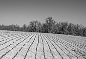 Elburgo - Bosque y campo 01.jpg