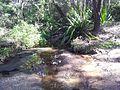 Engadine NSW 2233, Australia - panoramio (160).jpg