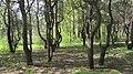 Engels, Saratov Oblast, Russia - panoramio (74).jpg