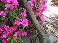 Entrada Jardín Japones Museo Blanes.JPG