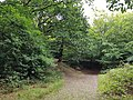 Epping Forest 20170727 111724 (49374786586).jpg