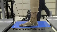 File:Evidence-for-a-Time-Invariant-Phase-Variable-in-Human-Ankle-Control-pone.0089163.s001.ogv