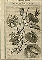 Exactissima descriptio rariorum quarundam plantarum, que continentur Rome in Horto Farnesiano (1625) (14773449341).jpg