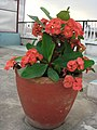 FLOWER POT AT MY HOME.... - panoramio.jpg