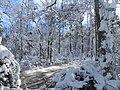 FL Swamp covered in Snow (5304126238).jpg