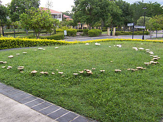 Fairy ring Naturally occurring ring or arc of mushrooms