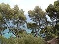 Fale - Giardini Botanici Hanbury in Ventimiglia - 371.jpg