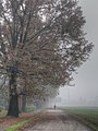 Fall - Fellegara, Scandiano (RE) Italy - December 4, 2011 - panoramio.jpg