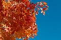Fall foliage img 2442.jpg