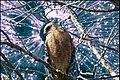 Fantasy art, hawk and brain cells - panoramio.jpg