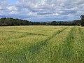 Farmland, Castle Sowerby - geograph.org.uk - 1567634.jpg