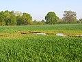 Farmland, Ruscombe - geograph.org.uk - 799219.jpg