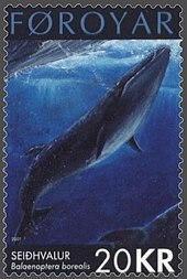 d2eaaea697c1 Drawing of a sei whale on a Faroese stamp