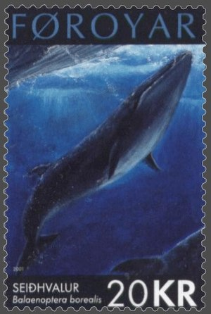 Sei whale - Drawing of a sei whale on a Faroese stamp, issued 17 September 2001
