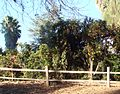 Fence and Oranges, Redlands, CA 2-2012 (6841887243).jpg