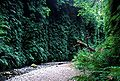 Fern canyon.jpg