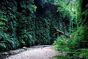 Fern Canyon -  Fern Canyon's lush walls