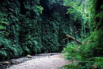 Fern Canyon - Fern Canyon's lush walls