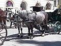 Fiaker horses in row.jpg