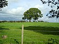 Field and Trees Near Ruthwell - geograph.org.uk - 565424.jpg