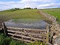 Field near Craig, Dunscovre - geograph.org.uk - 1328909.jpg