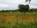 Fields malwa coolspark.jpg
