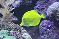 Fish - panoramio (7).jpg