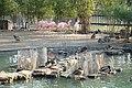 Flamants roses au jardin botanique de Genève.JPG